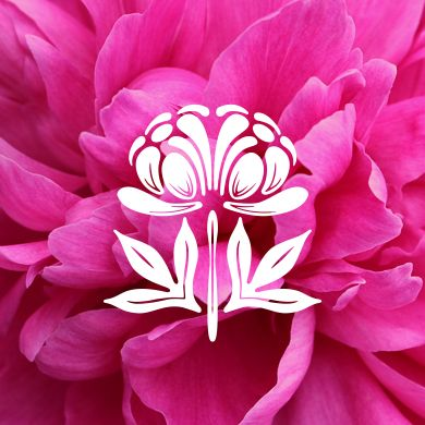 Peony Online Catalog  |  Spring 2014 Peony Catalog | Herbaceous Peonies, Intersectional Peonies & Tree Peonies for Sale