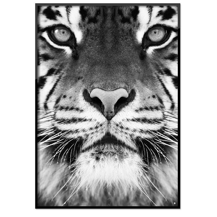 http://room99.se/tavlor-posters/posters/djur-natur/poster-im-the-tiger/