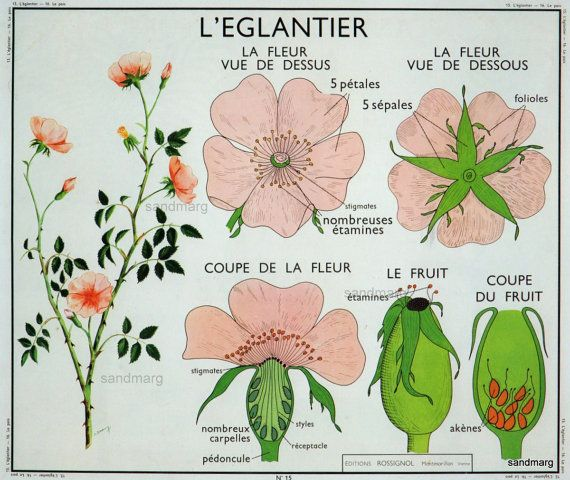 floridian chart in botany: 10 best ro liny images on pinterest activities botany and life