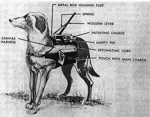 Los perros-bomba que los soviéticos utilizaban contra los tanques del ejército nazi