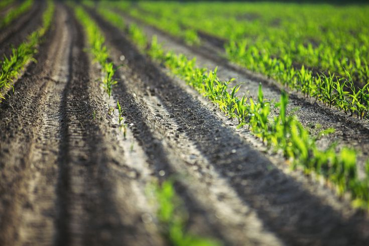 AgriClap : Excedentes Agricolas y Economia Circular