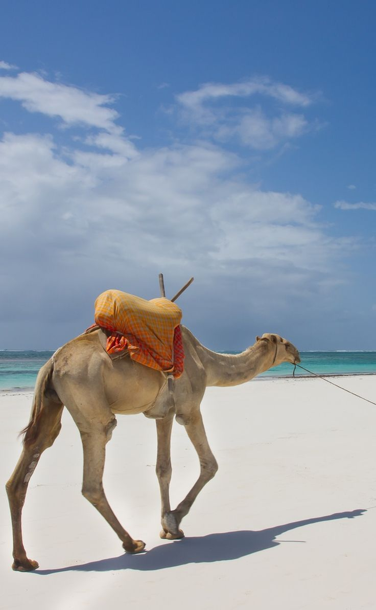 Diani beach flights