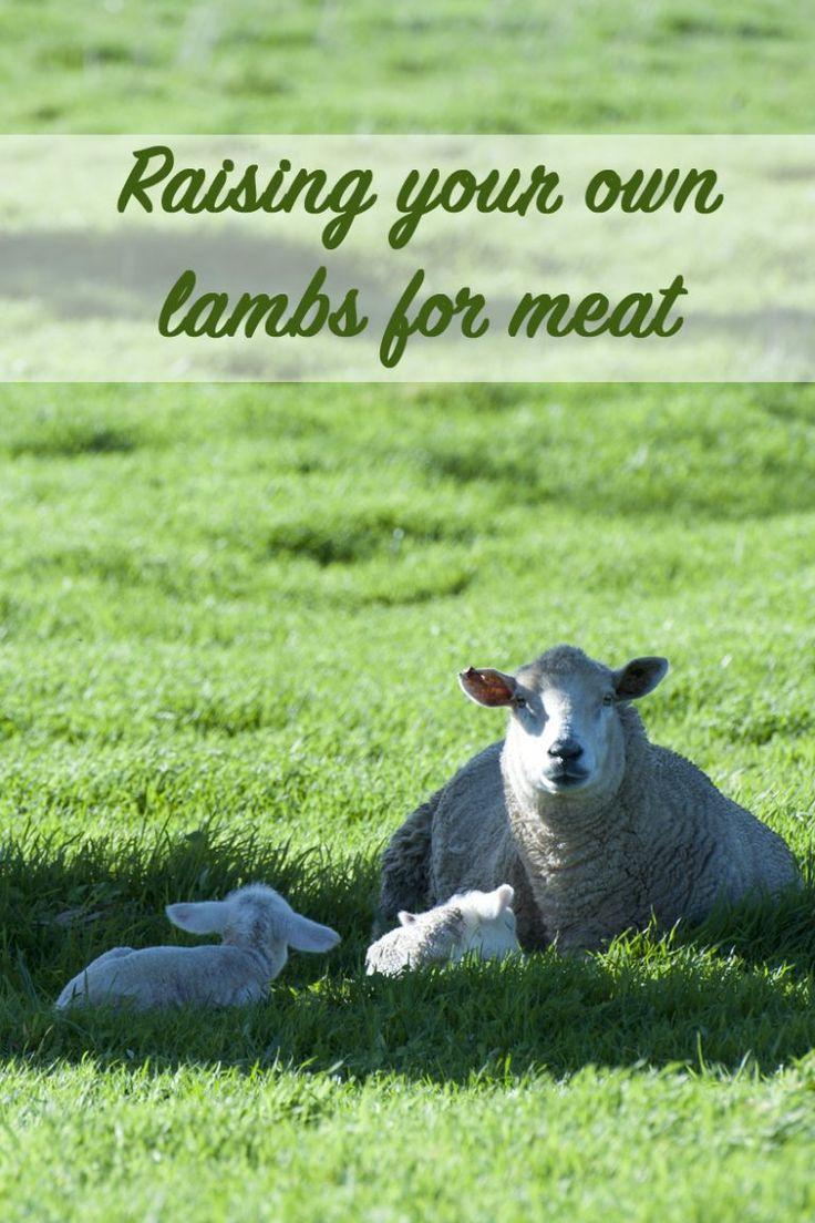 lamb dog food philippines