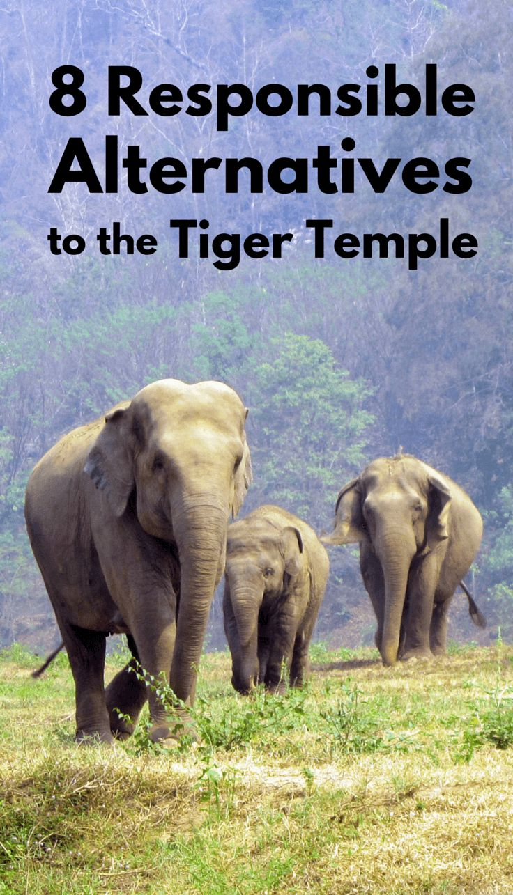 8 Responsible Alternatives to the Tiger Temple