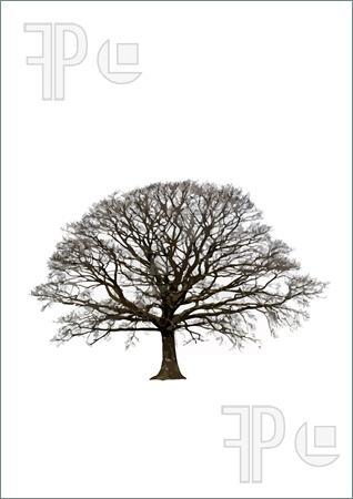 oak tree logo | Illustration of Abstract of an oak tree in ...