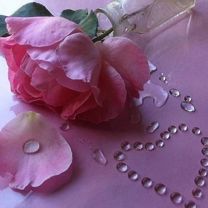 في حيــــــاتي قلوب هي من تذكرني بالخير قلوب دخلت حياتي بهدوء و ملأتني فرحا لم أكتفي منهم أجبروني على محبتهم و احترامهم Girl Quotes Flower Power Rose