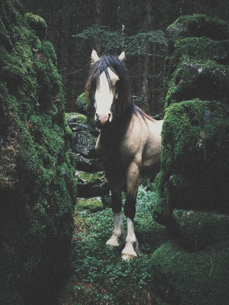 Wild Horse II | LOTHÈ DÉLUGE | #VSCO