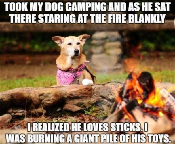 Took my dog camping and as he sat there staring at the fire blankly I realized he loves his stick. I was burning a giant pile of his toys.