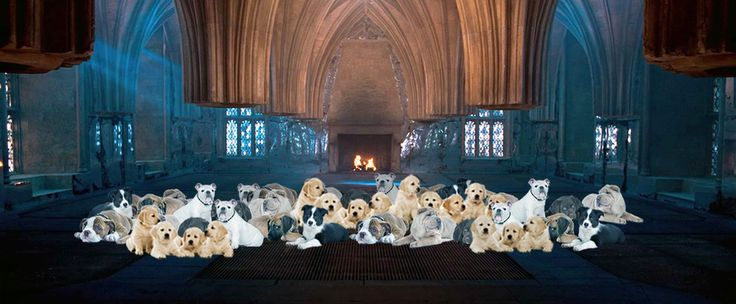 "All the puppies. | 12 Rooms Of Requirement That Should Have Existed In ""Harry Potter"""
