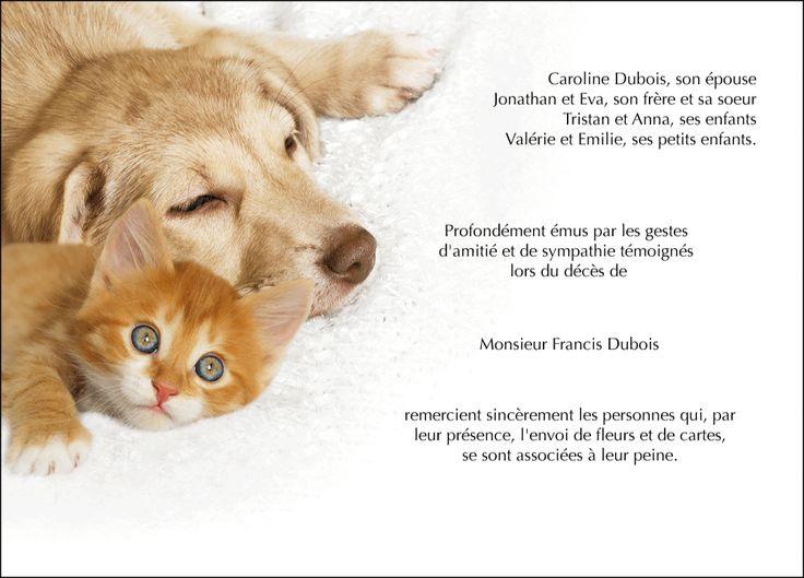 Carte de remerciements condoléances - thème animaux - Solitude des cœurs - Chien et chat