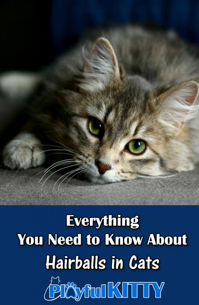 Hairballs can be really gross! Here are some tips to help you prevent your cat from having frequent hairballs. #cats