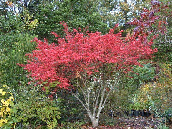 668 best images about les 750 esp ce d 39 arbres et arbustes for Arbustos de jardin nombres