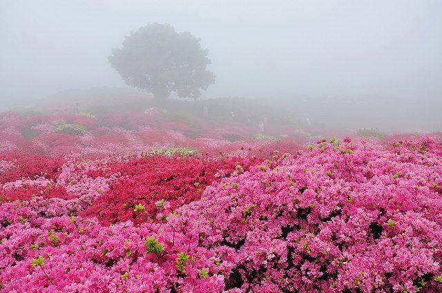 Bajo la niebla encontraras brillantes y maravillosos COLORES