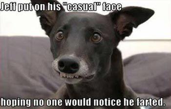 funny dog pic dog fart
