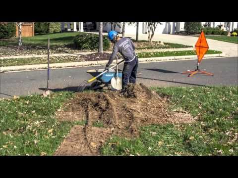 Time Lapse: How To Level a Tree Stump Mound with a Stump Grinder - YouTube
