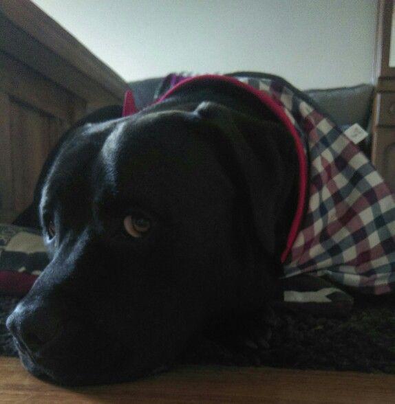 Mumsy made me a new bandana