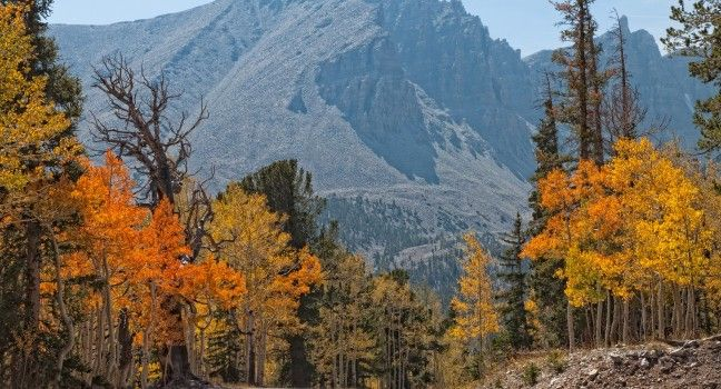 Great Basin National Park Travel Guide - Expert Picks for your Great Basin National Park Vacation