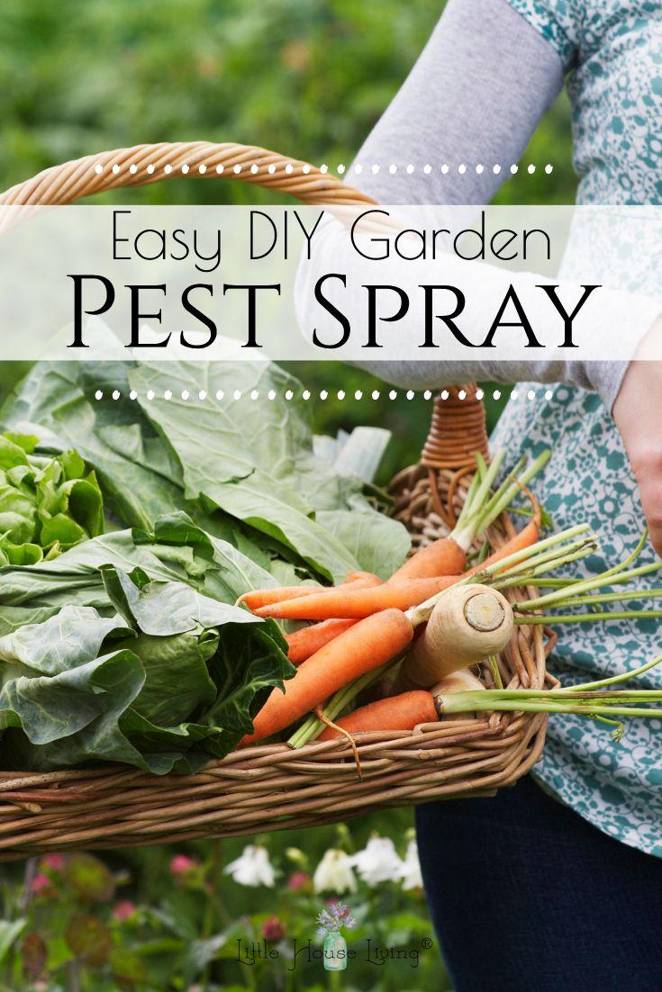 311b368824e07a6ed27e8089898c8c28 - Diy Organic Pest Control For Gardens