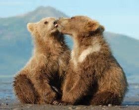Image result for Cute animals kissing Wild