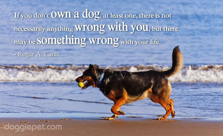 Hit Like if You Agree! doggiepet.com