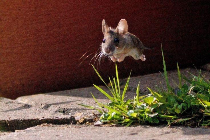 26 Fotos, o diretório certo, foi perfeito Timing ist  – Tiere