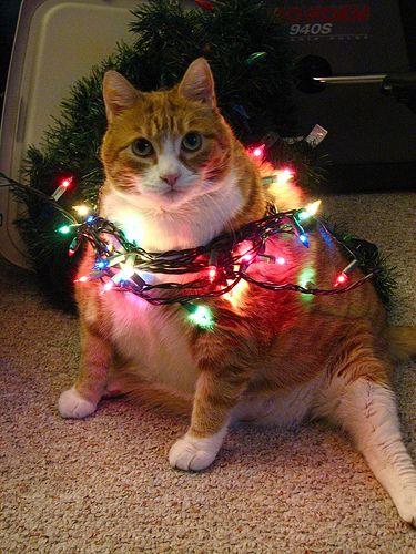 Bright lights, big kitty!