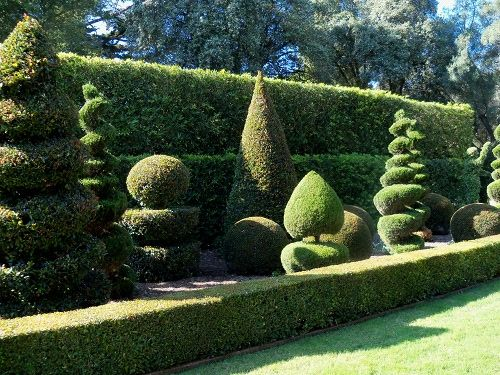 17 best images about topiaries on pinterest gardens for Topiary garden designs