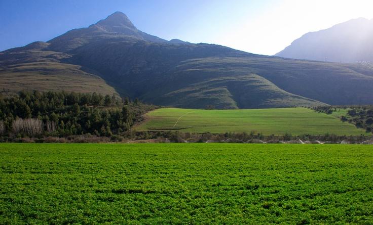 De Rust - home!South Africa