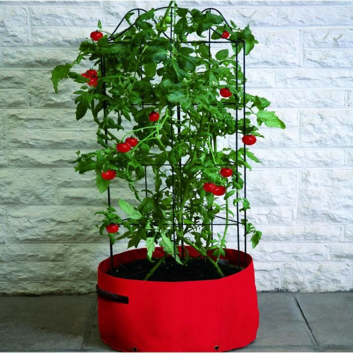 Lovely Tomato Patio Planter With Climber