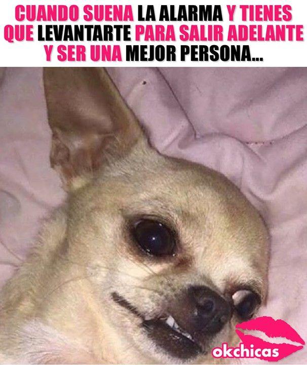 Pin By Kiri Sama On Humor Y Algo Mas Funny Memes Bad Memes Memes