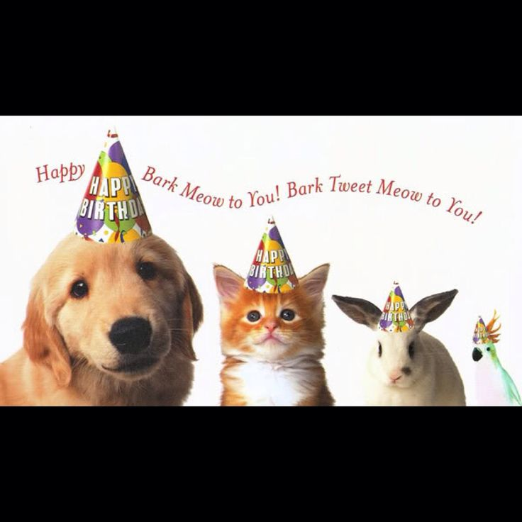 130 best Cards -Birthday (Clip Art -Animals) images on ...