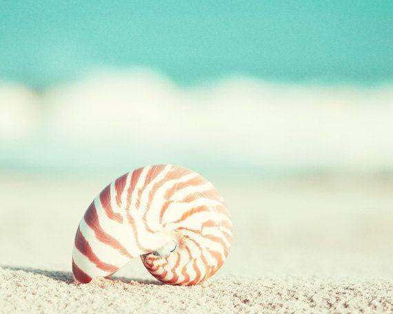 Beach Photography – nautilus shell seashell seashore teal turquoise aqua wall art orange shore print – Sylvie