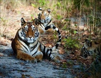 Το Εθνικό Πάρκο Kanha βρίσκεται στην περιοχή Madhya Pradesh στην Ινδία, κοντά στους λόφους Vindhya και κατά μήκος του ποταμού Ken. Αποτελεί ένα από τα μεγαλύτερα εθνικά πάρκα της Ινδίας και ένα από τα εννιά
