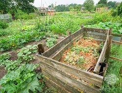 """Kompost - """"złoto ogrodników"""""""