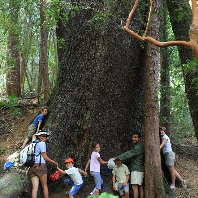 #TurismoSanClemente    PARQUE NATURAL TRICAHUE 🌳🍃🌄  En el sector de Armerillo encontraras una red de senderos en los bosques del Parque Natural Tricahue, la visita recomendada es caminar 2 horas y abrazar el Tata.
