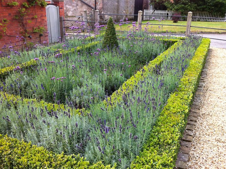 Box hedge lavender and verbena village front garden for Garden hedge designs