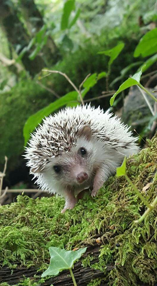 #Igel im #Wald #Fotografie ♡☆ Sweet little Hedgehog ☆♡