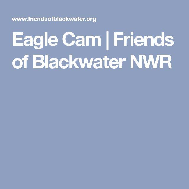Eagle Cam | Friends of Blackwater NWR