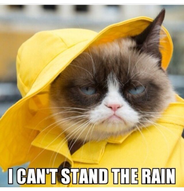 Funny Quotes About Rainy Days: Unless Is Raining Dogs.....then That's Funnier Than Hell