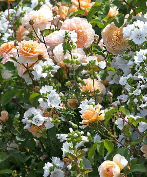 Comment Bien Harmoniser Les Fleurs De Vos Massifs Jardin Et Maison