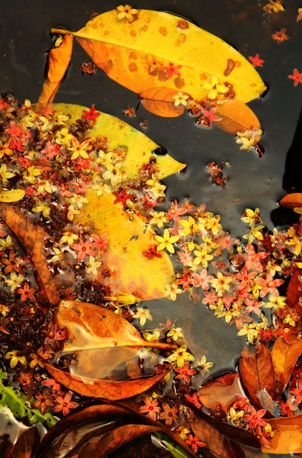 so delicate #Fall_leaves floating in water