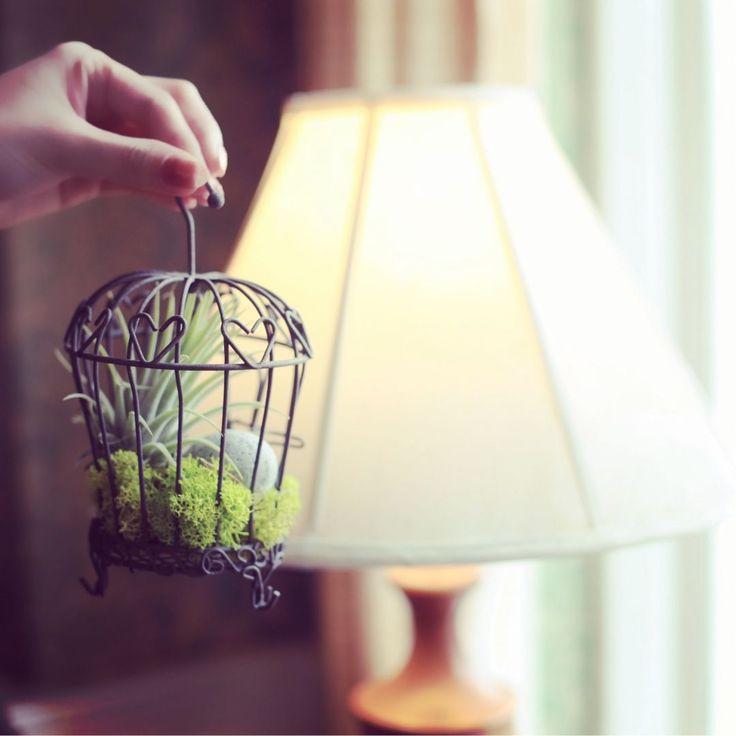 Pinterest 상의 작은 정원  정원 가꾸기, 정원 디자인 및 조경에 ...