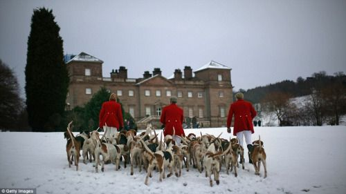 """holdhard: """" The Albrighton Woodland Hunt at the ancestral home of Lord Cobham at Hagley Hall, near Bromsgrove. """""""