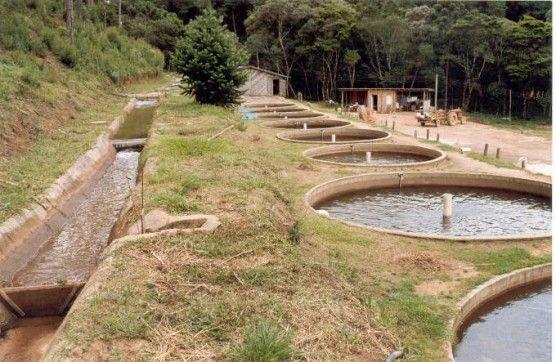 O ideal é contar com abastecimento e distribuição de água por gravidade, já que reduz o custo operacional durante o manejo dos viveiros