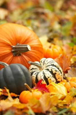 How to Successfully Plant and Grow Pumpkins