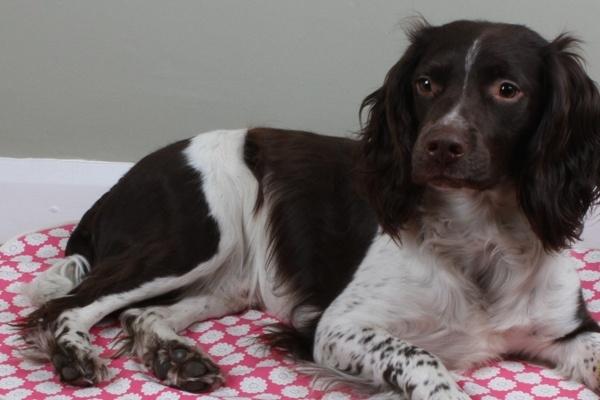 Kip Dog Bed Oval in Daisy Raspberry fabric