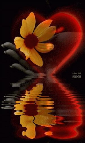 Gif reflections | Hearts, Water Reflections, Flowers, Reflections, Reflection, Animated ...