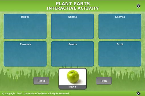 Student Activity - Plant parts -  In this activity, students relate commonly eaten foods to different parts of the flowering plant life cycle. They use an interactive or paper-based graphic organiser.