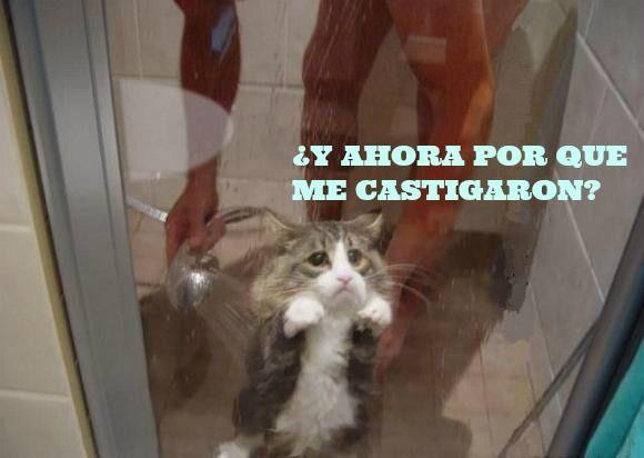 Descargar+Memes+De+Gatos+Graciosos