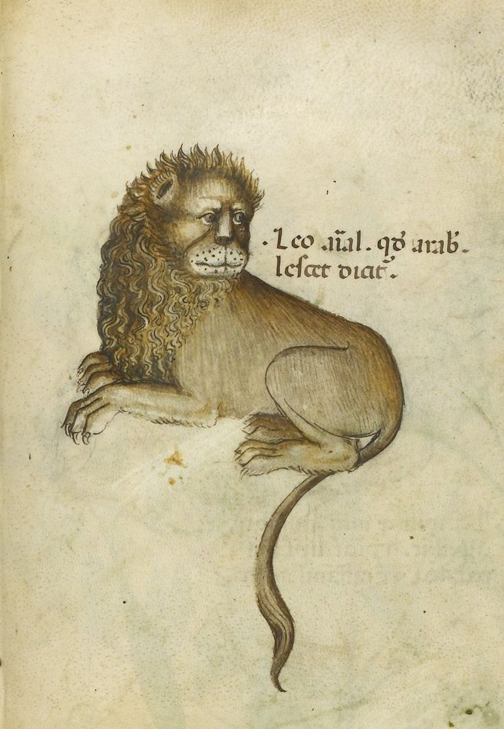 Lion. Herbal, Italy, N. (Lombardy), c. 1440. Sloane 4016 f. 50, BL